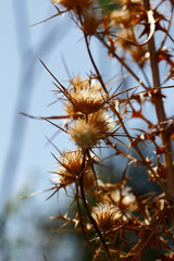 Dried plants on the summer field, blue sky background