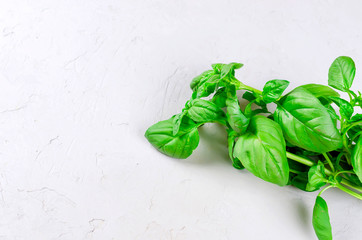 Bunch of fresh green basil on a  wood background