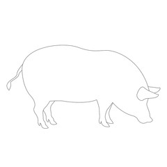 pig coloring vector illustration line drawing profile
