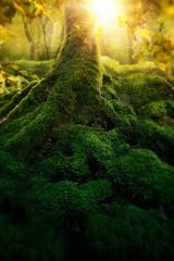 Fototapeten Wald Deep magic forest