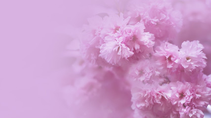 flowering branches of trees in spring. toned. place for text. flowers background