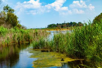 Delaware Marsh
