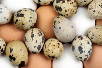 different quail and chicken eggs lie together close-up