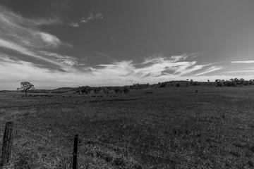 Black and White, Farmland, NSW, Australia