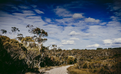 The outback with dramatic Sky, Blue Mountains, NSW, Australia
