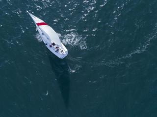 海でヨットが風を受け旋廻している風景
