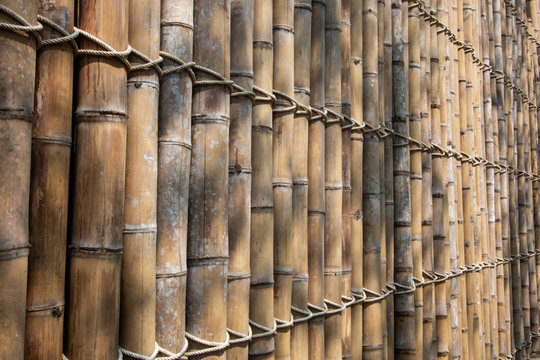 bamboo wall background .