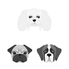 Dog breeds monochrome icons in set collection for design.Muzzle of a dog vector symbol stock web illustration.