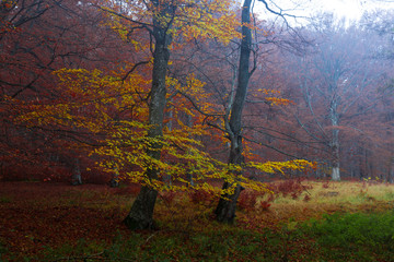 Foggy forest in autumn morning light