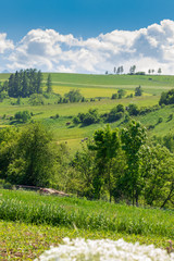 In de dag Lime groen Picturesque, spring mountain landscape, Low Pieniny, Poland
