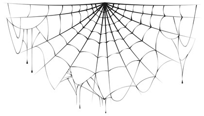 Torn semicircular spider web over white background