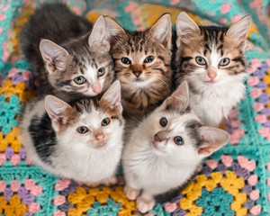 Five kittens cutely huddled together on a colourful blanket