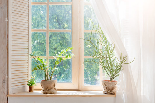 Green cactus, succulents on the windowsill with light soft background. Spring or summer greeting card. Home plants on the windowsill.