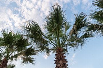 tropical palm trees against the sky