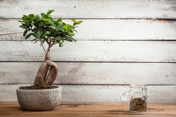 Bonsai tree and money in glass jar
