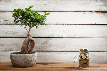 Bonsai tree and overflow of money in glass jar
