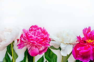 Frame of beautiful fuchsia and white peony flower bouquet on the white background. Closeup, flatlay style.