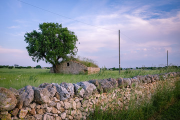 Rural drystone hut in Murgia countryside. Apulia, Italy