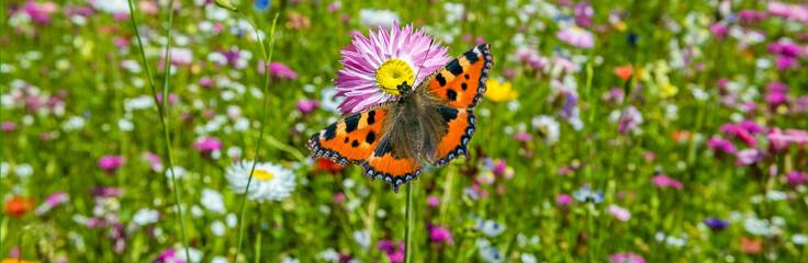 Schmetterling auf einer Blumenwiese