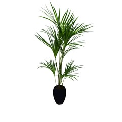 nature plant on pot