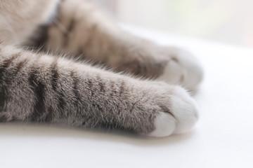 Little cat's legs look cute.