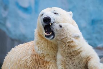 Fond de hotte en verre imprimé Ours Blanc Polar bear with cub