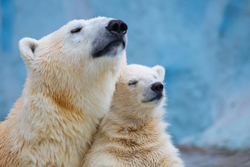 Foto op Plexiglas Ijsbeer Polar bear with cub