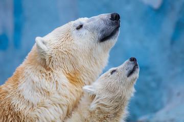 Foto op Aluminium Ijsbeer Polar bear with cub
