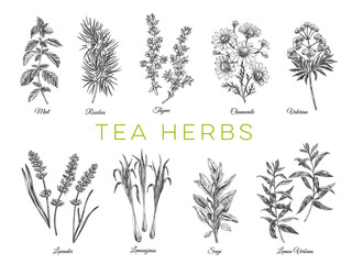 Beautiful vector hand drawn tea herbs Illustrations.