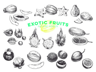 Beautiful vector hand drawn exotic fruits Illustrations set.