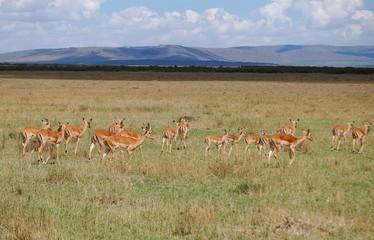 Poster Antelope Kenya