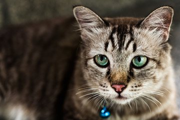 Close up portrait of green eyes cat