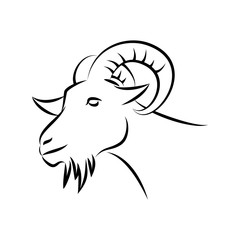 goat head sketch, animal line art, vector template ready for use