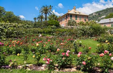 """GENOA (GENOVA), ITALY, MAY 18, 2018 - The rose garden """"Il Roseto"""" in Genoa (Genova) Nervi, inside Genoa Nervi Parks, Italy."""