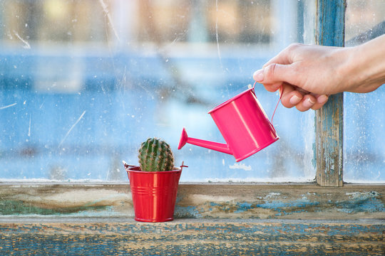 Small pink watering can in a female hand watering a cactus on an old window