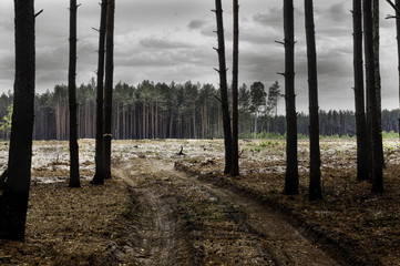 The severed forest. Problems of human life and influence on nature. Ecological problems.