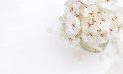 Styled photos in pastel colors with beautiful white flowers