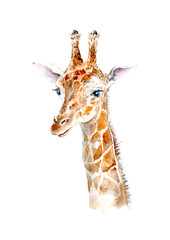 Yellow giraffe portrait.Watercolor hand drawn illustration.White background.African animals illustration.