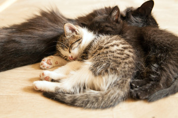 The little kitten sleeps with her mother and young kittens.