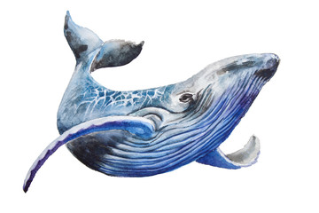 Watercolor blue whale. Illustration isolated on white background. For design, prints or background