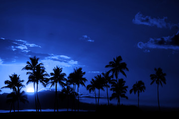Tropical Palm Trees Silhouette Full Moon Midnight