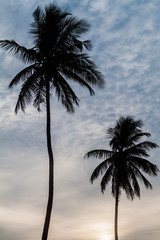 Silhouettes of palms at Nilaveli beach near Trincomalee, Sri Lanka