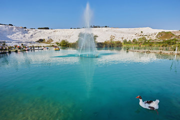 Geese on the lake, calcified limestone terraces on background, Pamukkale