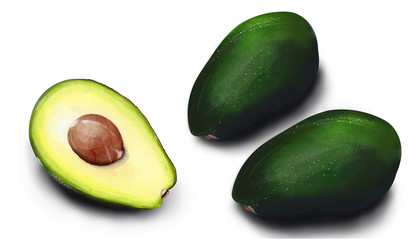 Hand drawn watercolor Isolated avocado