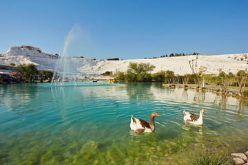 Lake with green water, calcified limestone terraces on background. Pamukkale