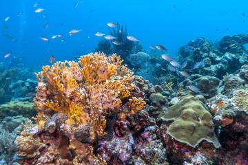 Aluminium Prints Under water Caribbean coral reef