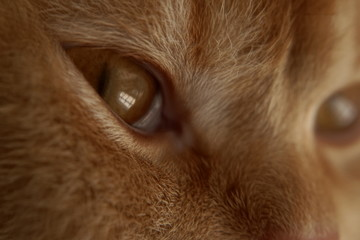 Cat eye macro view