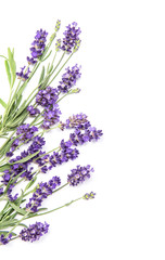 Lavender herb flower white background Floral border