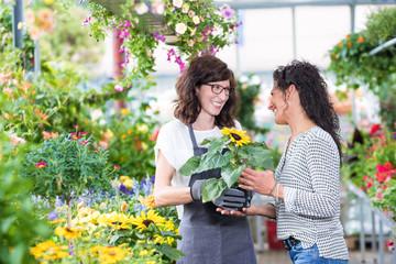 Gärtnerin im Gewächshaus verkauft lächelnd einer Kundin eine Sonnenblume