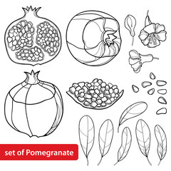 Vector set of outline Pomegranate half and whole fruit, ornate flower, leaf and seed in black isolated on white background. Drawing of ripe Pomegranate in contour for summer design or coloring book.